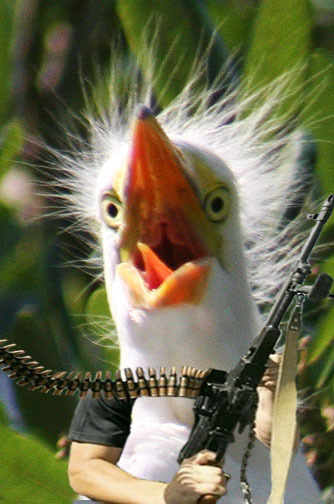 fundybird